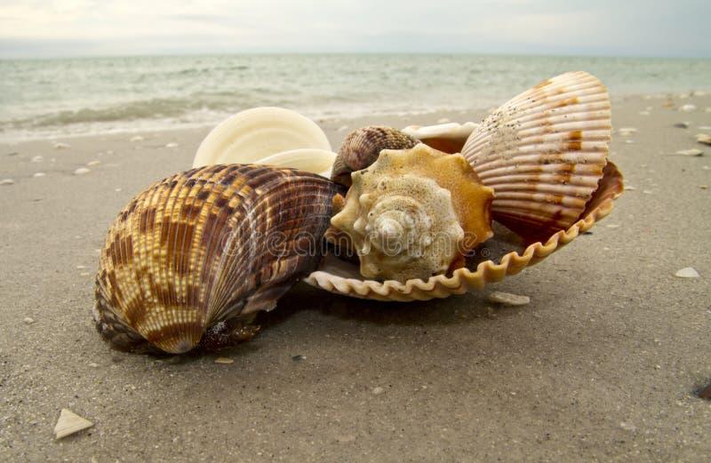 海滩壳 免版税图库摄影