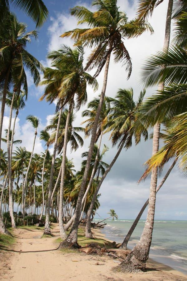 海滩多米尼加共和国的天堂共和国 免版税库存照片