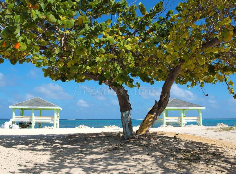 海滩大鳄鱼葡萄海岛海运结构树 免版税图库摄影