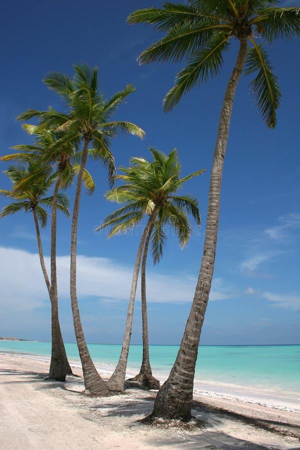 海滩天堂沙子白色 免版税图库摄影
