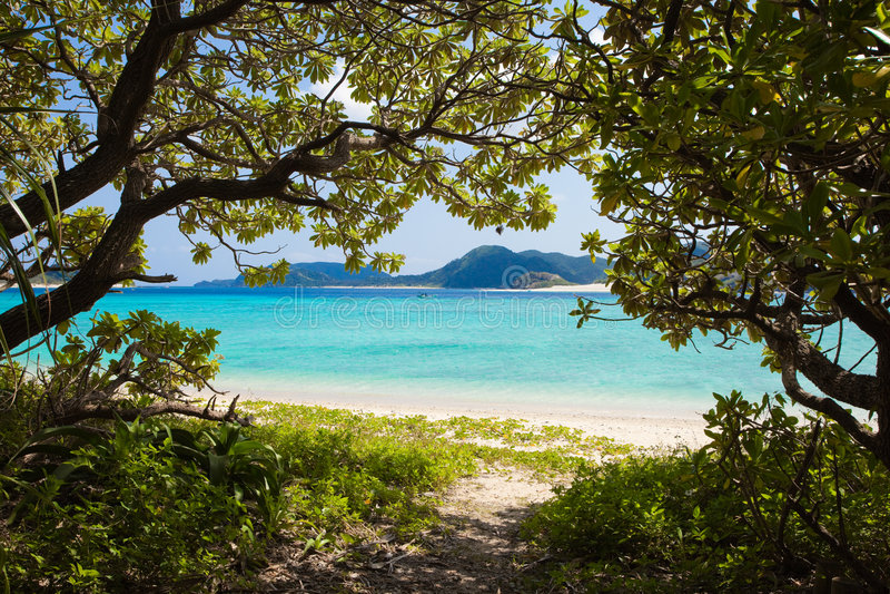 海滩密林天堂路径 库存照片