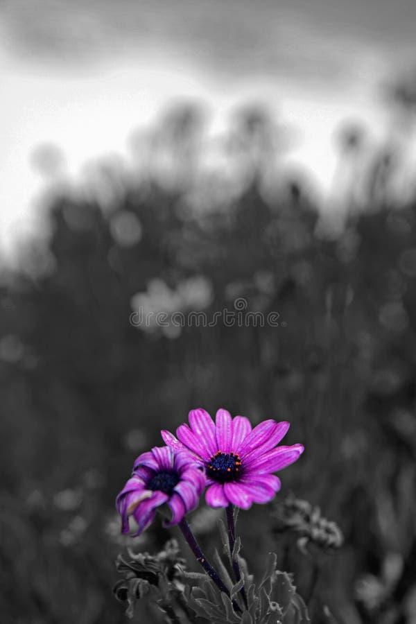 海滩开花被突出的黑白 免版税库存照片