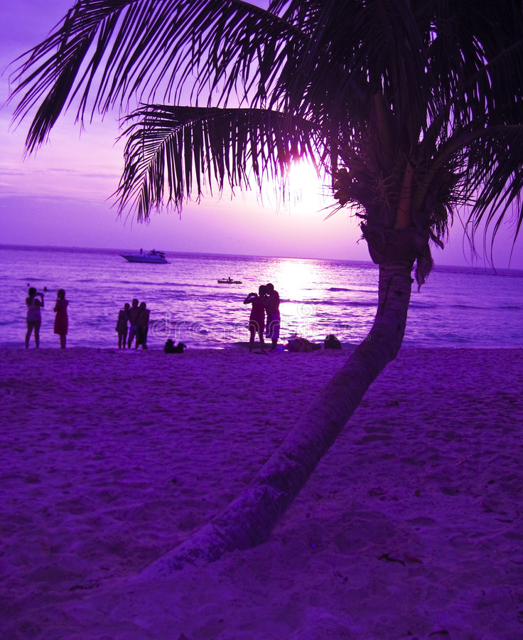 海滩掌上型计算机日落结构树 库存图片
