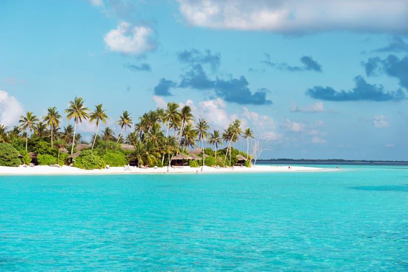 海滩掌上型计算机热带沙子的结构树 免版税库存图片