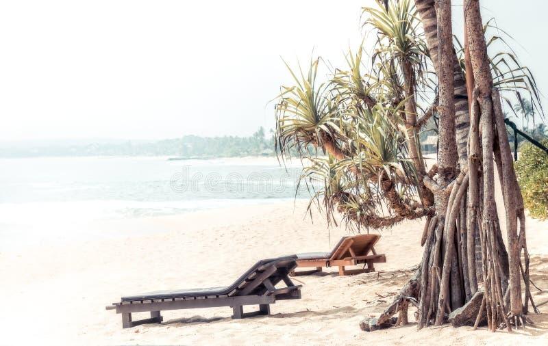 海滩暑假假日环境美化与棕榈树冲浪海太阳懒人当旅行热带生活方式 免版税库存照片