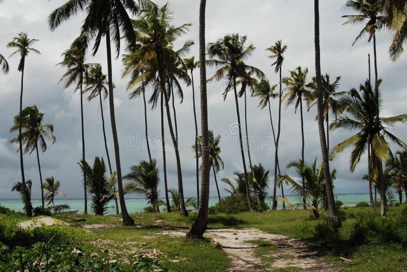 海滩桑给巴尔 库存照片