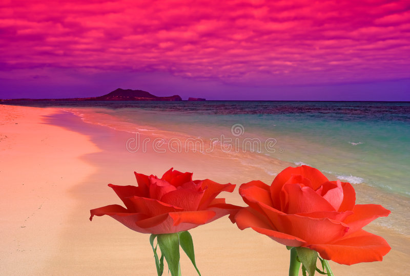 海滩梦想玫瑰 免版税库存图片