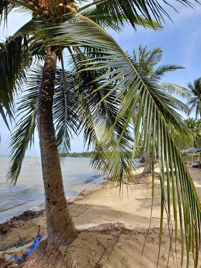 海滩棕榈树越南 图库摄影