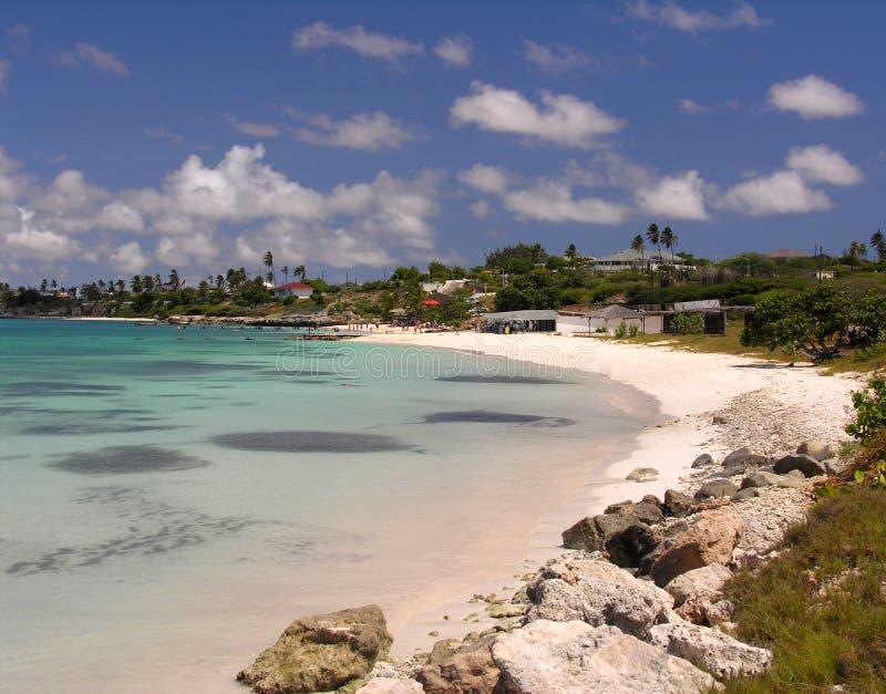 海滩椰树 库存照片