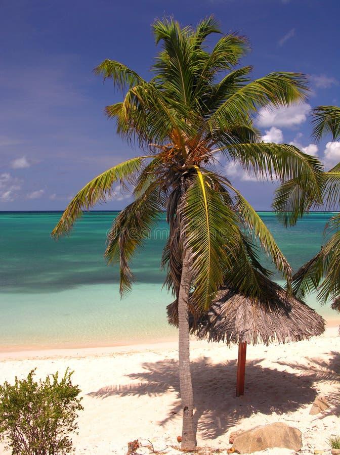 海滩椰树 库存图片