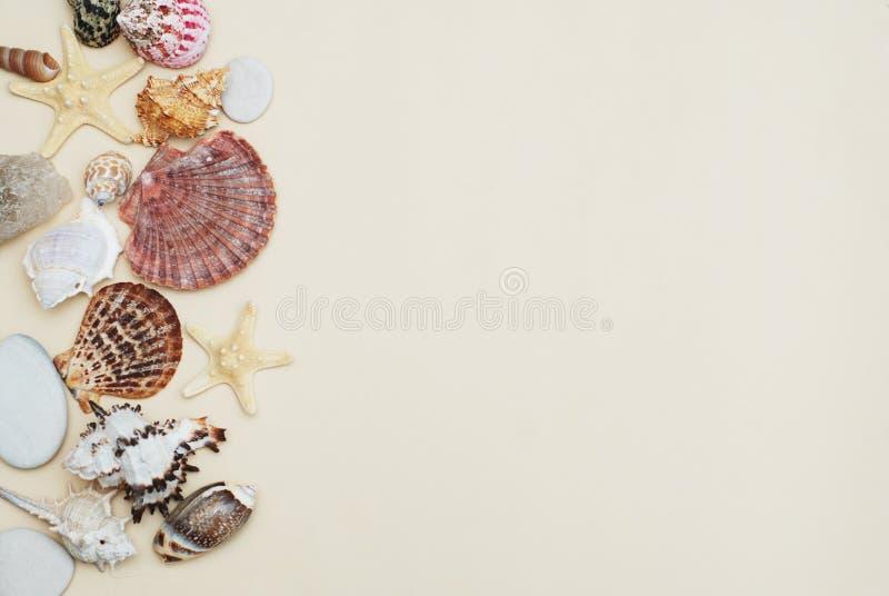 海滩概念贝壳暑假 壳和石头的混合在象牙背景与拷贝空间文本的 顶视图 免版税库存照片
