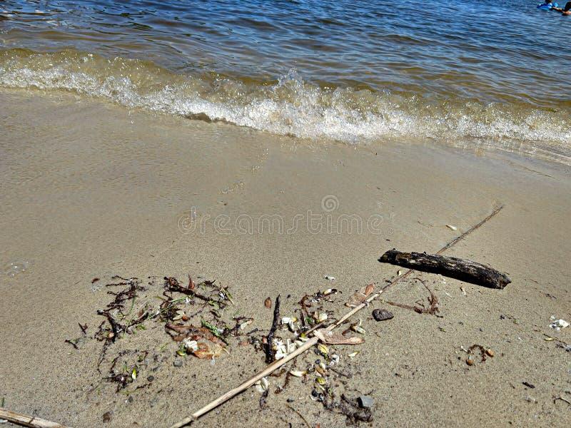 海滩残骸和漂泊木头 免版税库存图片