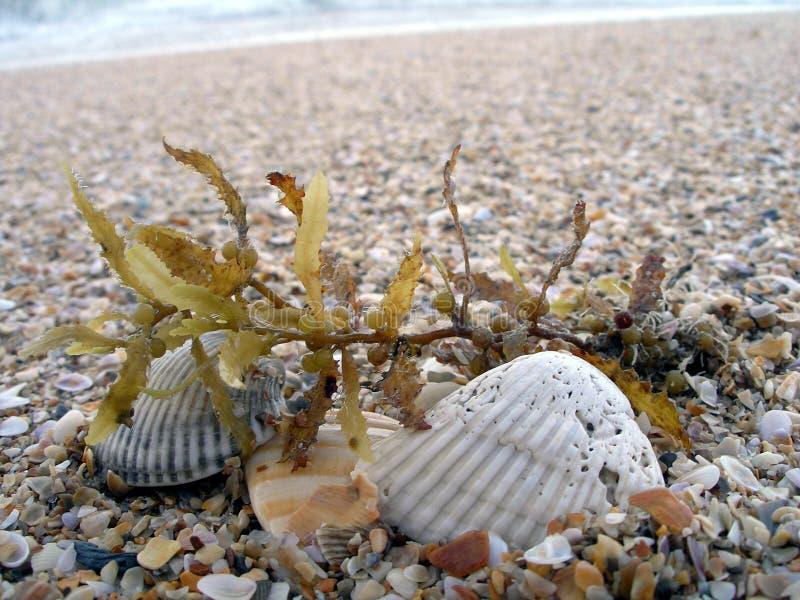 海滩残骸 免版税库存图片