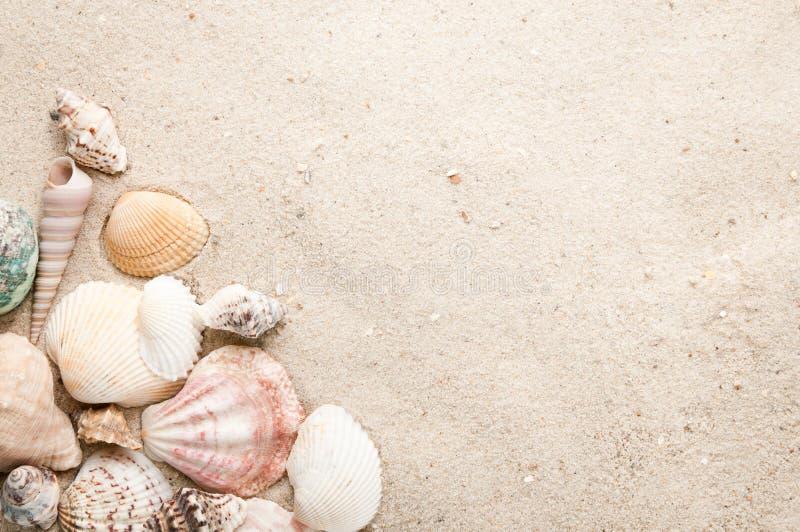 海滩沙子贝壳 免版税库存照片