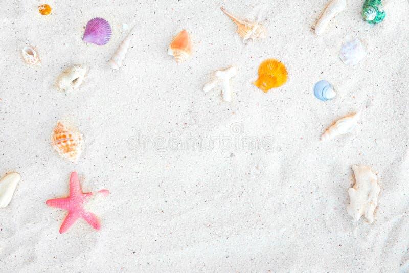 海滩沙子顶视图与壳和海星的 免版税库存照片