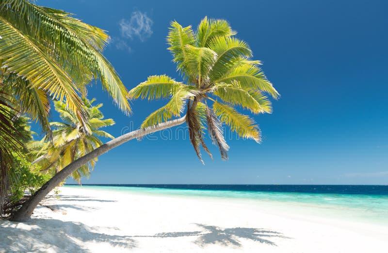 海滩海岛掌上型计算机天堂结构树
