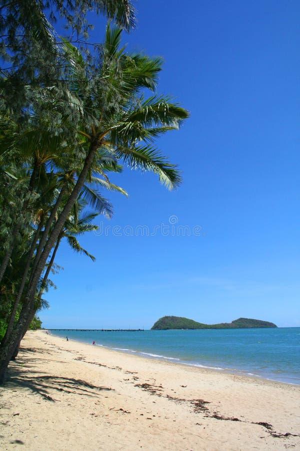 海滩海岛热带的棕榈树 库存图片