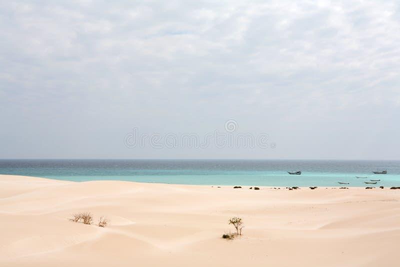 海滩海岛索科特拉岛 免版税库存图片