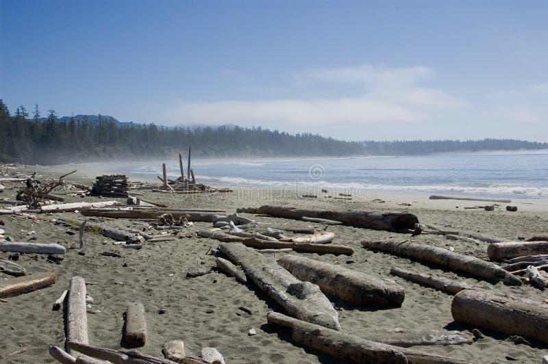 海滩海岸太平洋 免版税库存图片