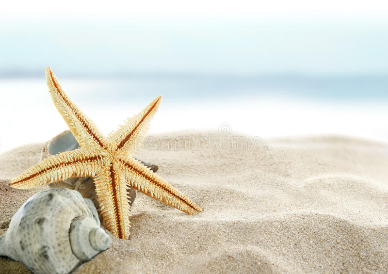 海滩海星 免版税图库摄影