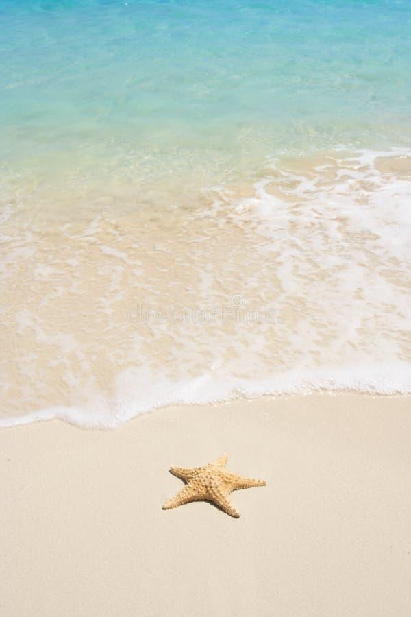 海滩海星 免版税库存照片