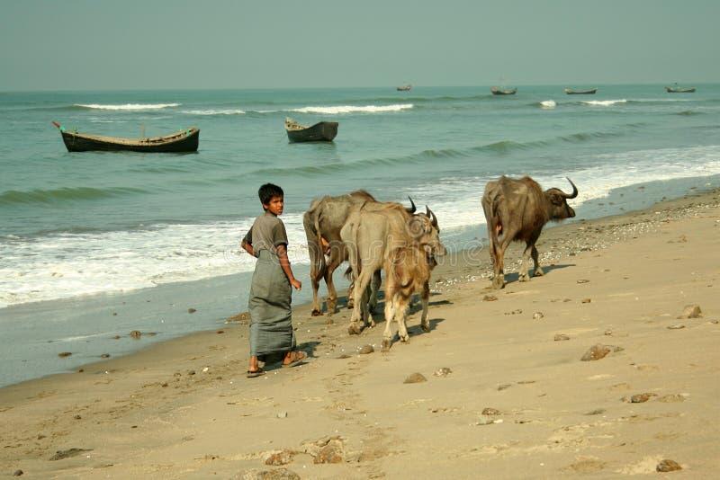 海滩牧羊人 免版税库存图片