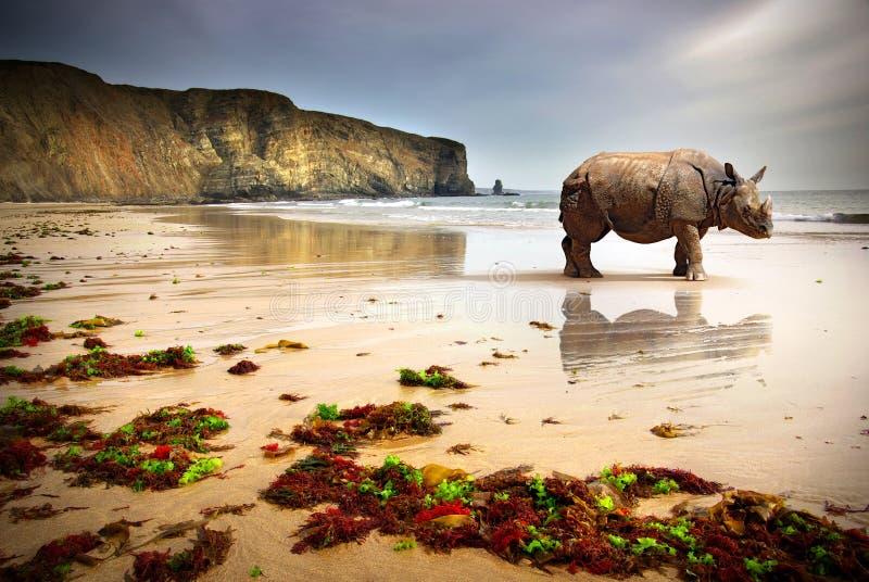 海滩犀牛 免版税库存照片