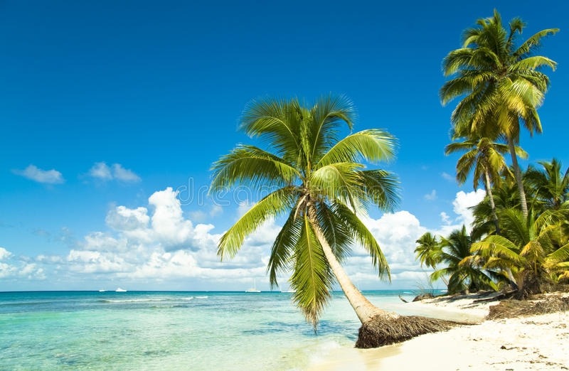 海滩田园诗热带 免版税库存图片