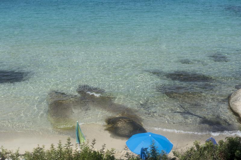 海滩的杉木森林在夏天 免版税库存照片