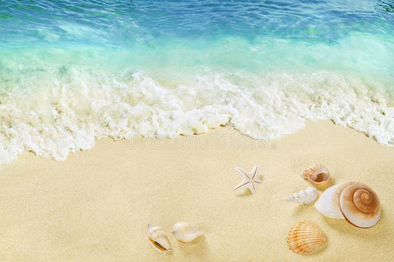 海滩的看法与壳的在沙子 免版税图库摄影