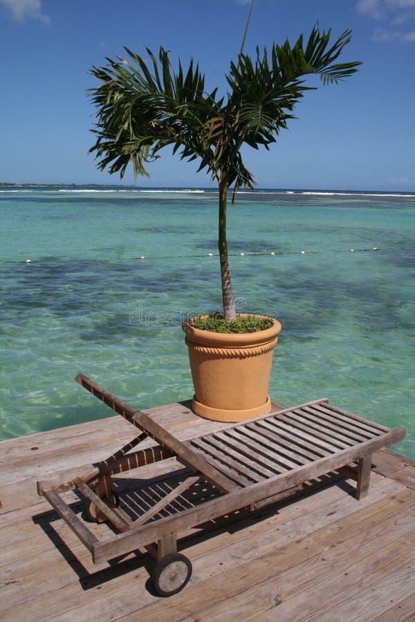 海滩睡椅下棕榈树 库存图片