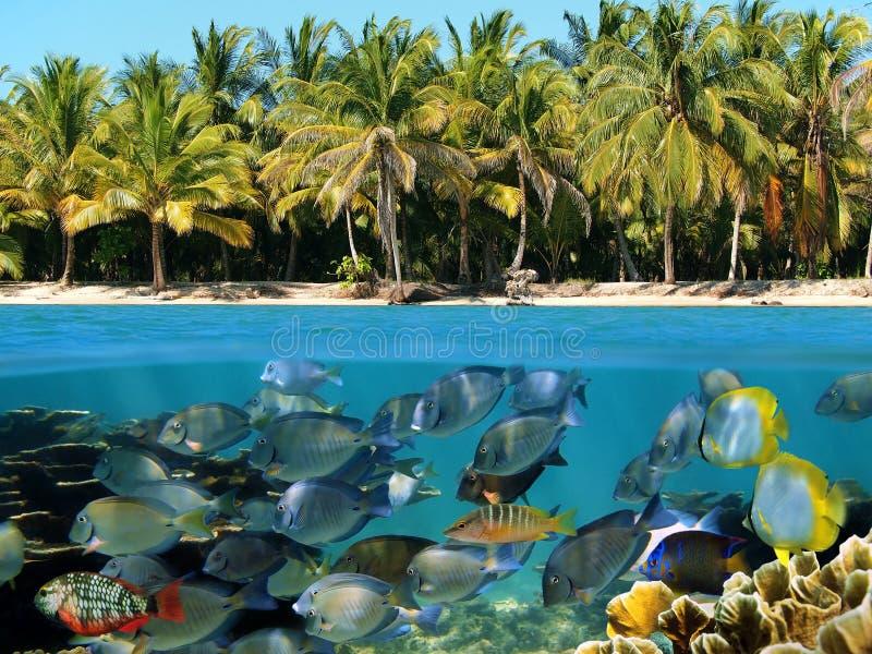 海滩礁石 免版税库存照片