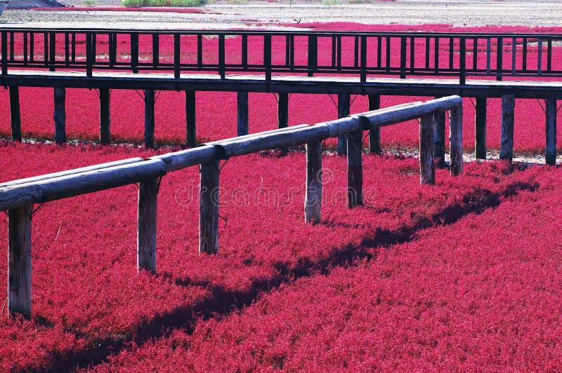海滩红色 库存图片