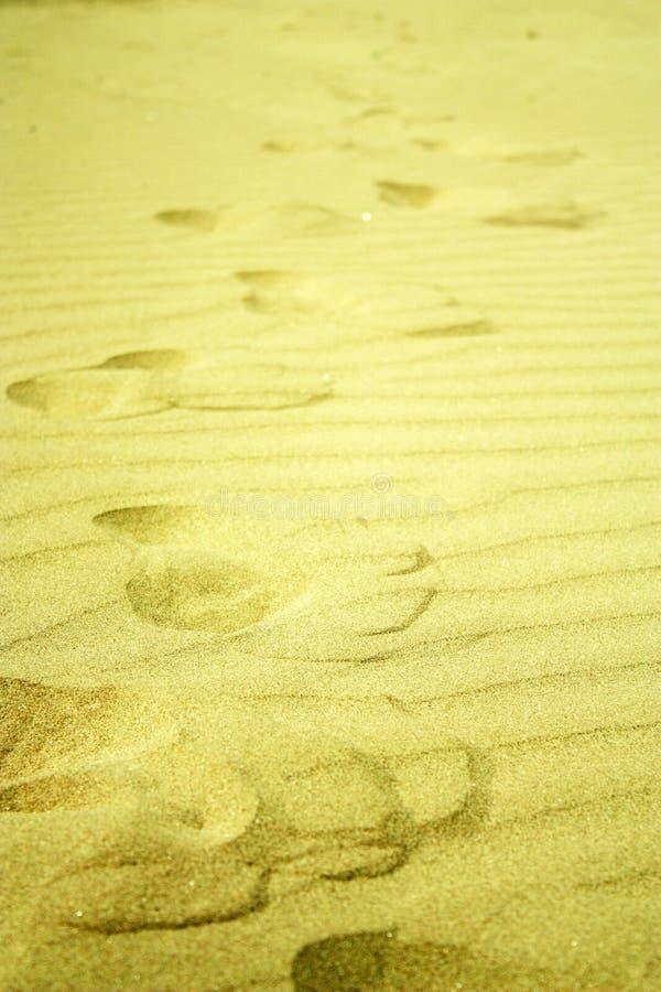 海滩脚步金黄沙子 免版税库存图片
