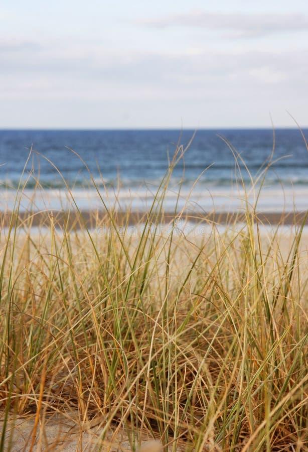 海滩草海运 免版税库存照片