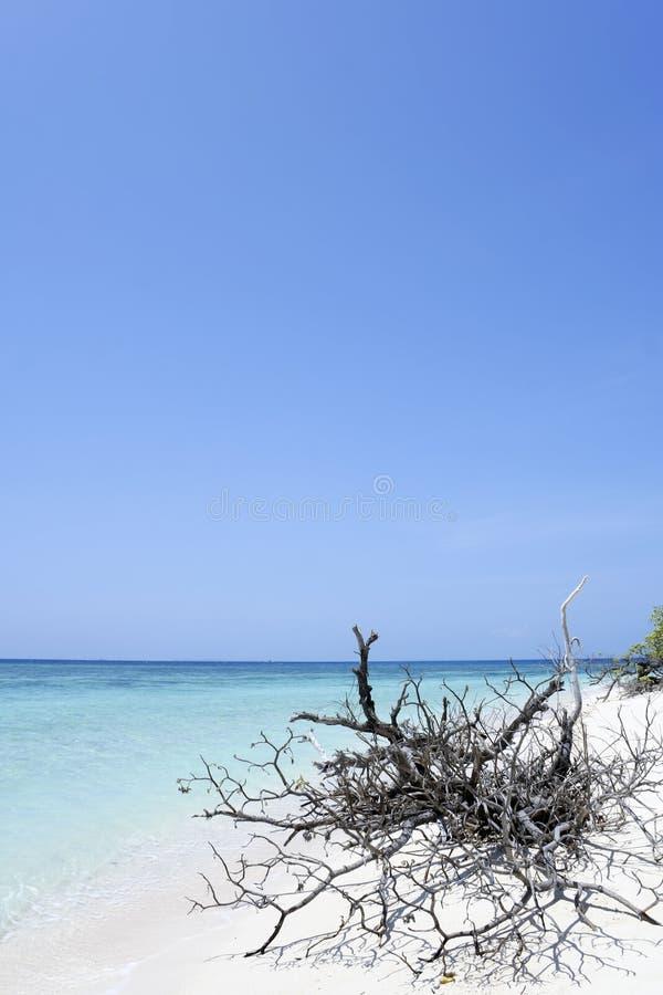 海滩蓝色沙漠漂流木头海岛天空 免版税库存图片