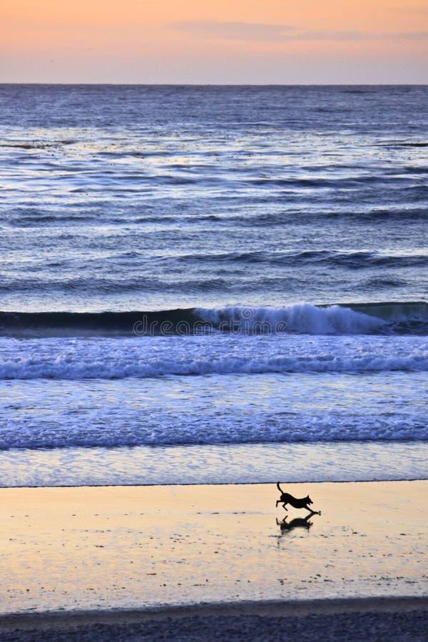 海滩运行 图库摄影