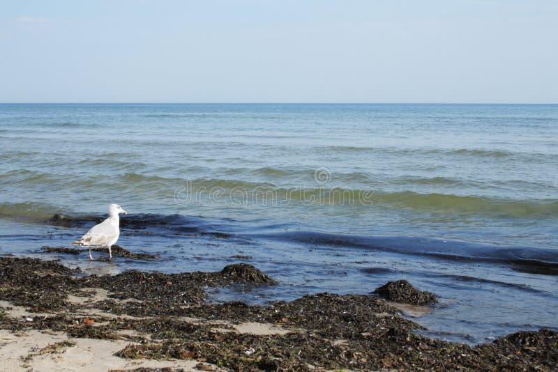 海滩鸟坏的海运 免版税库存照片