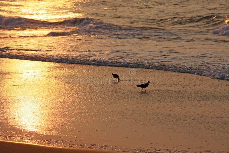 海滩鸟日出 图库摄影