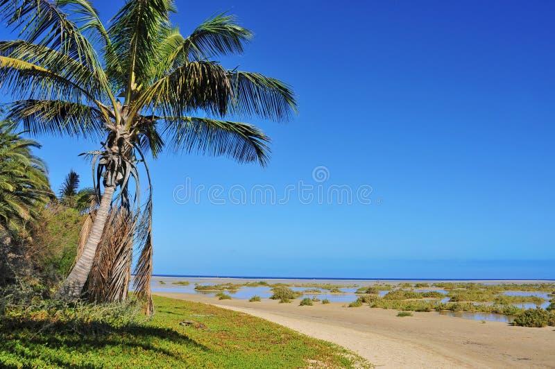 海滩黄雀色费埃特文图拉岛海岛sotavento 库存图片