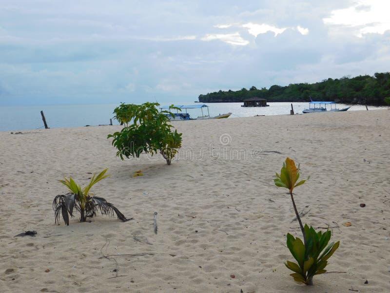 海滩,海,沙子,看法,植物 免版税库存图片