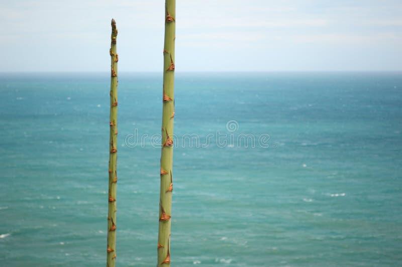 海滩,这里美丽的海滩 库存照片