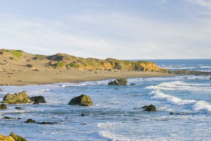 海滩blancas加利福尼亚cambria piedras 库存照片