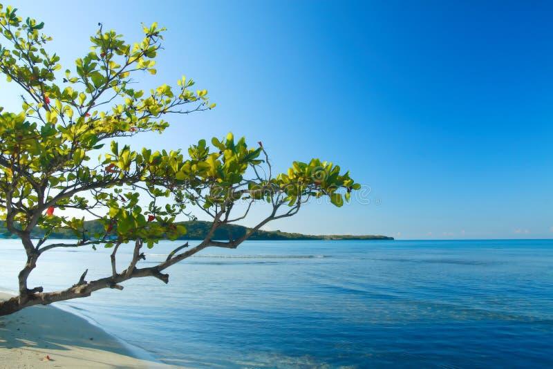 海滩buye加勒比岛热带波多里哥的场面 免版税库存图片