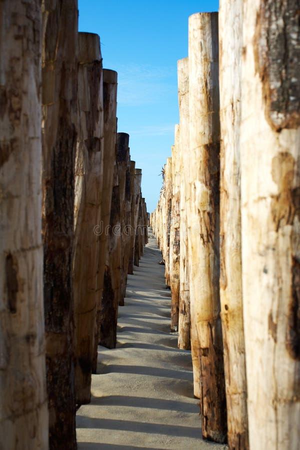海滩groynes 免版税图库摄影