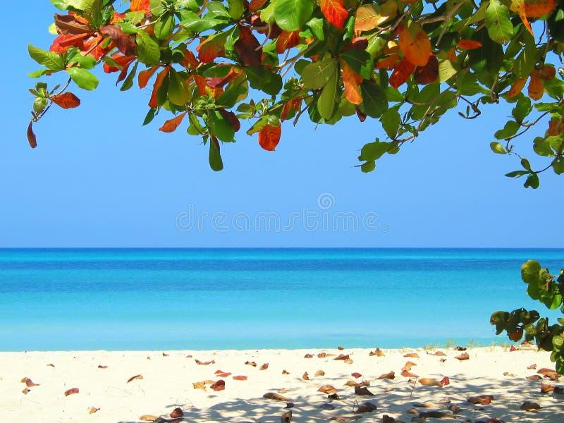 海滩negrils 免版税图库摄影
