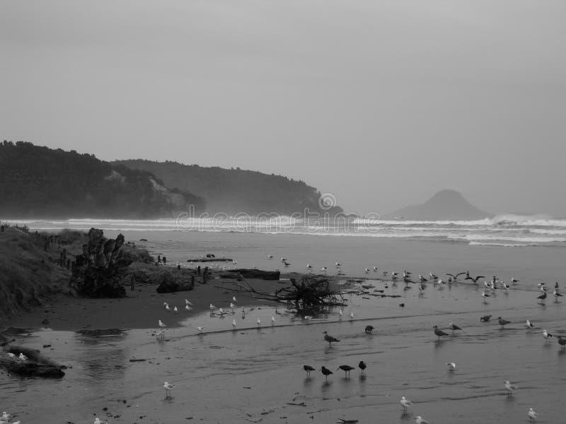 海滩ohope 库存照片