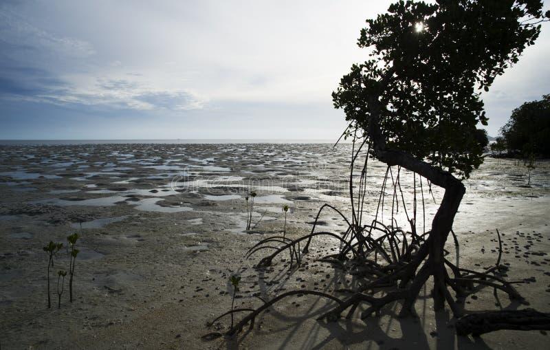 海滩ouano 库存图片