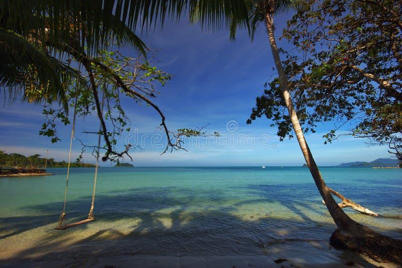 海滩palmns 库存图片