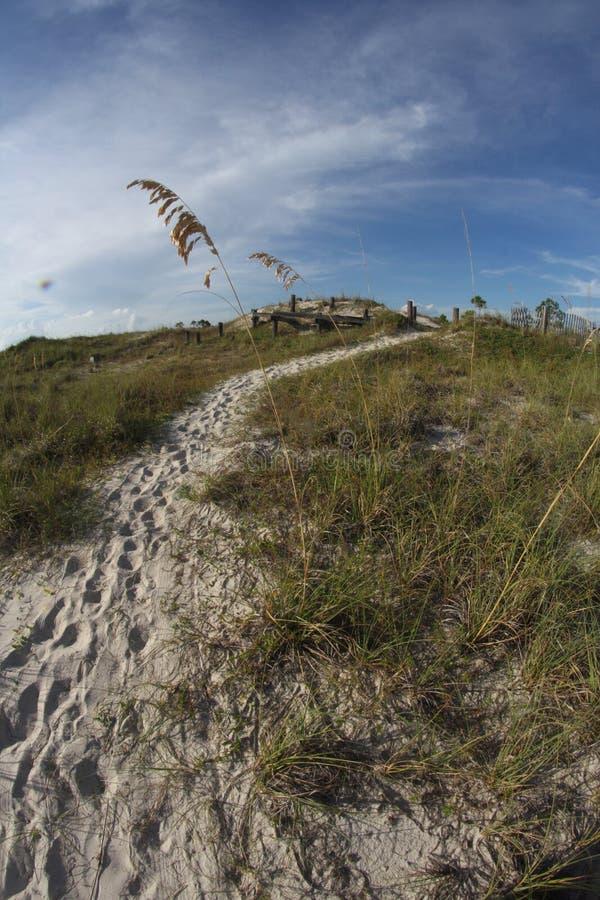 海燕麦之间的沙子道路在海滩 免版税库存照片